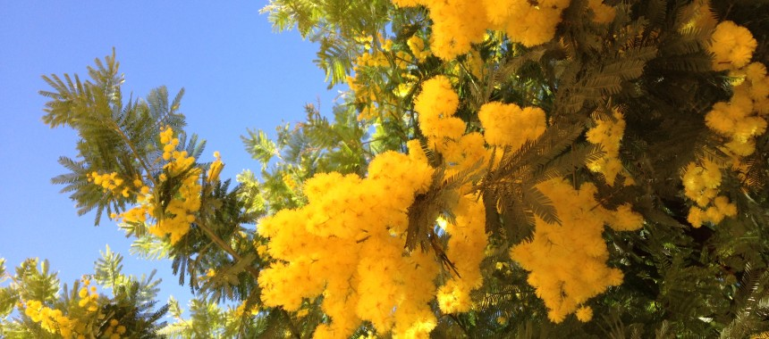 International Woman's Day – Mimosa Cocktail